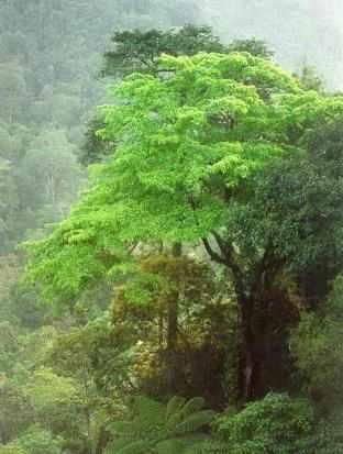 indonesian-rain-forest-photo-by-bambang-mertaini