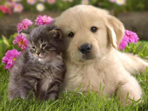 cute puppies and kittens wallpaper xpc0gtur
