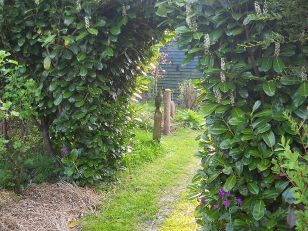 April 2011 Bealtaine Cottage Laurel arch023