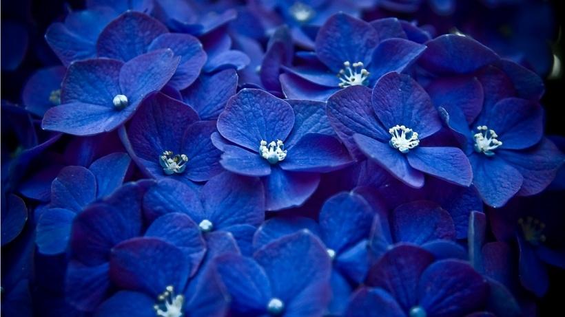 Image from Fanpop Flowers
