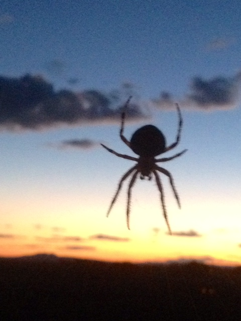 FROM WISE OWL LIZ IN NEW MEXICO - WEAVING SPIDERS WELCOME AT ORACLE REPORT