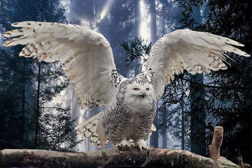 SENT IN BY WISE OWL LINDA. SOURCE: BIRDCAM ITALIA