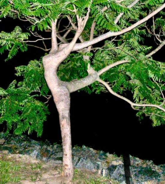 THE DANCING TREE TAKEN IN CANADA BY CAROL LEE FRASER AND SENT IN TO ORACLE REPORT BY WISE OWL YVONNE IN SWEDEN. LOVE THIS ONE!