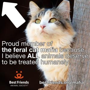 Best Friends Feral Cat Mafia